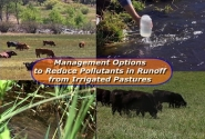 Management Options to Reduce Pollutants in Runoff from Irrigated Pastures