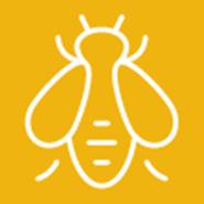 ¡Esté alerta! La abeja africanizada en California