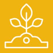 Eggplant: UC IPM Pest Management Guidelines