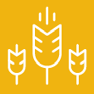Small Grain Production Pt 12: Small Grains in Crop Rotations