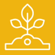 Cucurbits: UC IPM Pest Management Guidelines