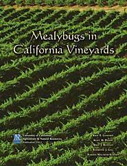 Mealybugs in California Vineyards- PDF