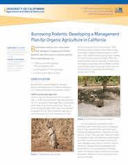 Burrowing Rodents: Developing a Management Plan for Organic Agriculture in CA