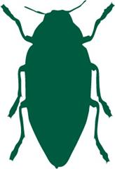 Bark Beetles: Pest Notes for Home and Landscape