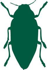 Citrus Leafminer: Pest Notes for Home and Landscape