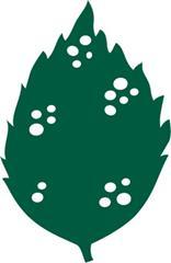 Oleander Leaf Scorch: Pest Notes for Home and Landscape