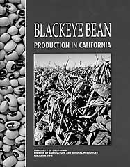 Blackeye Bean Production in California