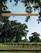 Vineyards in an Oak Landscape - PDF
