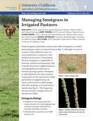 Managing Smutgrass in Irrigated Pastures